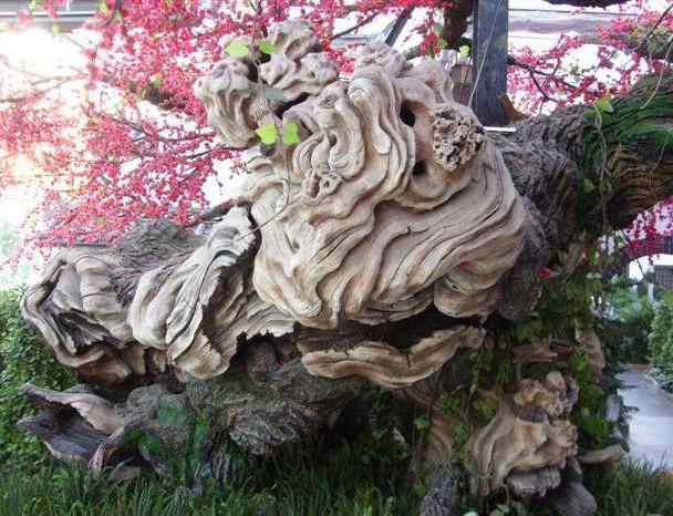防腐木假树
